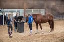 Het ponykamp bij manege De Boschhoeve in Soerendonk.