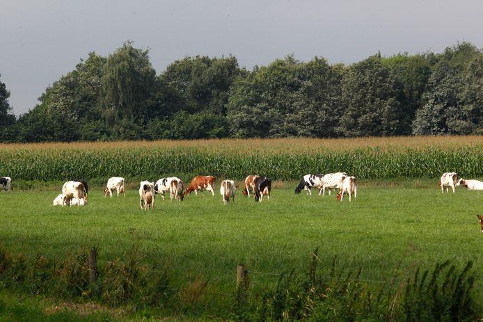 Twee derde van de Nederlandse grond wordt gebruikt voor landbouw, dus voor weilanden, akkers en maisvelden.
