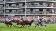 Stad stelt coördinator paardensport aan
