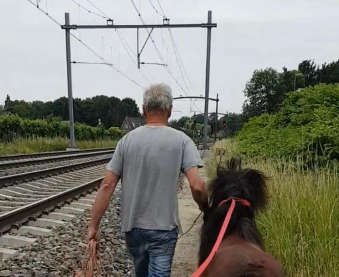 Het paard werd naar een veilige plek gebracht.