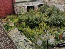 Acheter un terrain et en faire un jardin collectif, c'est le projet fou de ces habitants d'Outremeuse