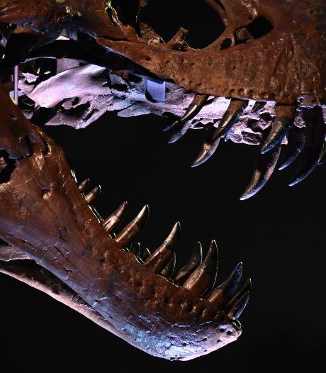 """Le """"grand-père"""" du T-Rex aux enchères à Paris"""