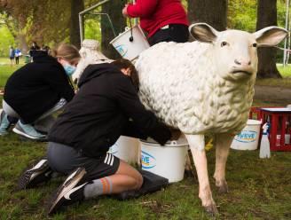 Melk eens een schaap: leerlingen Sint-Jozefcollege versterken teamgeest tijdens projectdagen