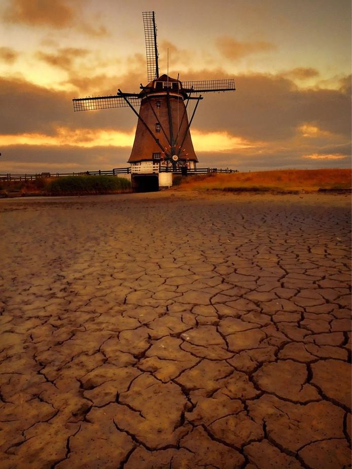 Extreme droogte bij de poldermolen op Texel waar normaliter volop water staat en vis zwemt, laat de bodem 'barsten'.