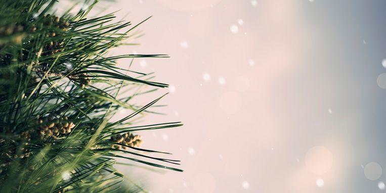 christmas-fir-tree.jpg