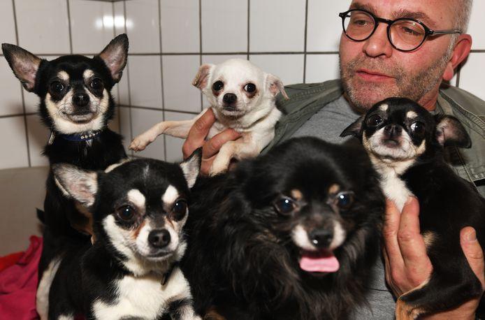 Asielmedewerker Roy van Baarle twee weken geleden, met de vijf chihuahua's om zich heen.