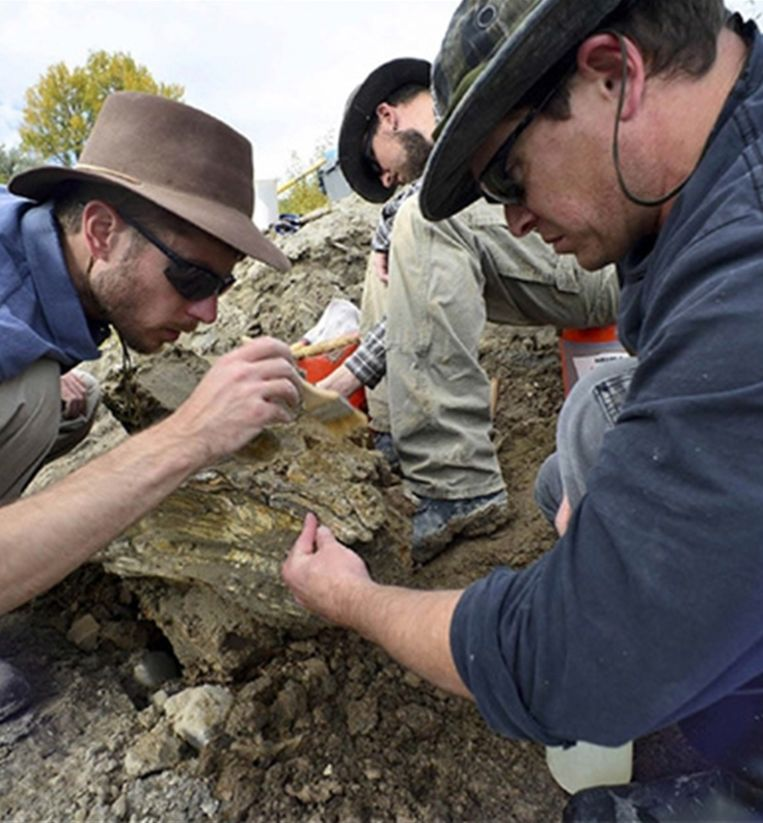 Het vermoeden bestaat dat ook de rest van het skelet in de buurt begraven ligt. Beeld Bureau of Reclamation Idaho
