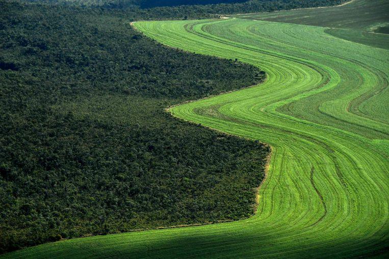 Een luchtbeeld van een landbouwveld naast een Cerrado-savannegebied. De helft van de ontbossing voor soja voor de Europese Unie vindt hier plaats, zegt een rapport van het WWF.  Beeld AFP