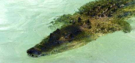 Il échappe de peu à un crocodile marin