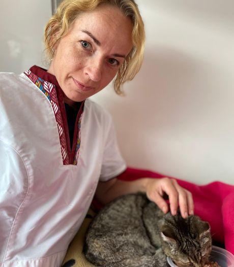 Zwerfkat Stumpertje overleeft 18 kogels en bekkenbreuk: dierenarts is dierenhater op het spoor