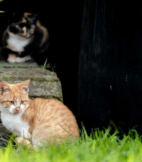 Jaag niet op zwerfkatten, maar kies voor de diervriendelijke oplossing