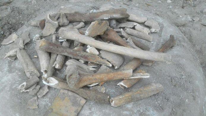 Menselijke botten die bij werkzaamheden rond de Marekerk in De Meern tevoorschijn zijn gekomen.