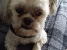 Eigenaresse agressieve rottweiler die hondje doodbeet in Helmond mogelijk toch vervolgd