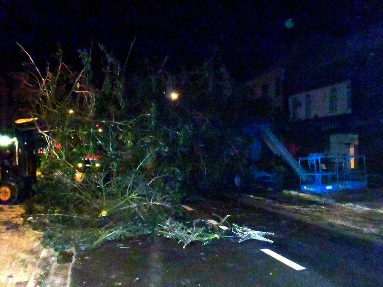 Een hevige windstoot velde de boom in 2010.