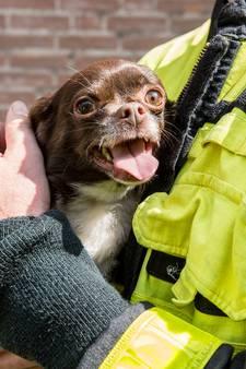 Vogel en hond gered bij woningbrand aan Hoge Brug in Roosendaal