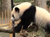 Weer naar de dierentuin maar wel met een negatieve coronatest