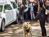 Hond Esco begeleidt rouwstoet voor doodgeschoten baasje Wisam (37)