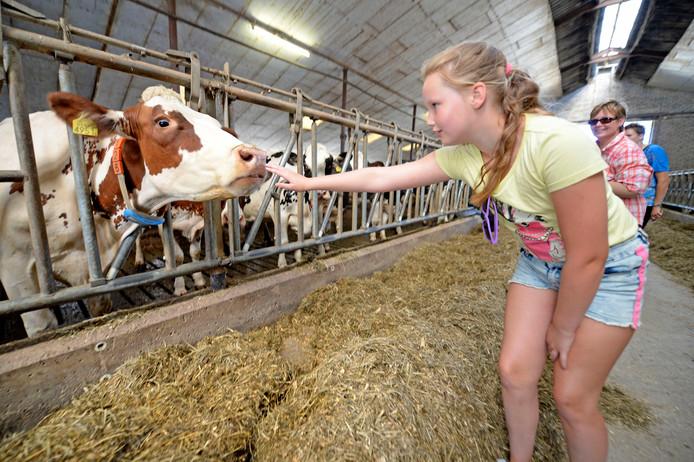 Jelske Franken vindt het vooral leuk om een koe te knuffelen en te aaien.