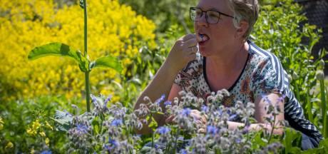 Proeven van de colaplant en ruiken aan vreselijke stinkerds in heemtuin 'Veermans Hof IJsselflora'