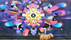 IN BEELD. Wereldwijd duikt streetart op over het coronavirus