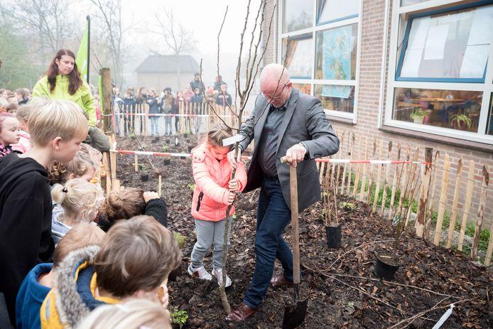 Theodora uit groep 1 van de Willibrordusschool plant samen met bestuurder Anton Wullems de eerste boom van het voedselbosje