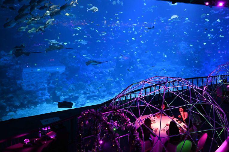 Elke dag wandelen bezoekers langs de waterbakken van het enorme aquarium S.E.A. in Singapore waar vissen uit alle wereldzeeën zijn te zien. Na sluitingstijd worden daar de dinertafels klaargezet van het pop-uprestaurant. Dat heet dan 'Aqua Gastronomie'.  Beeld AFP