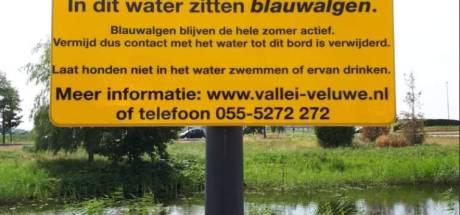 Blauwalg in Arkervaart, gemeente Nijkerk waarschuwt voor gevaarlijk water