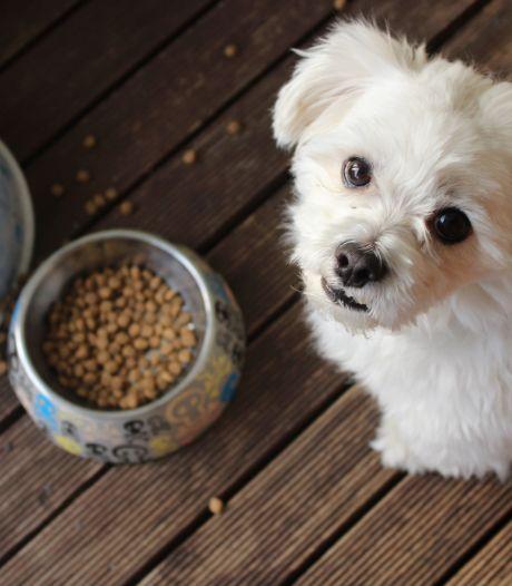 Liège organise une grande collecte de dons pour les animaux