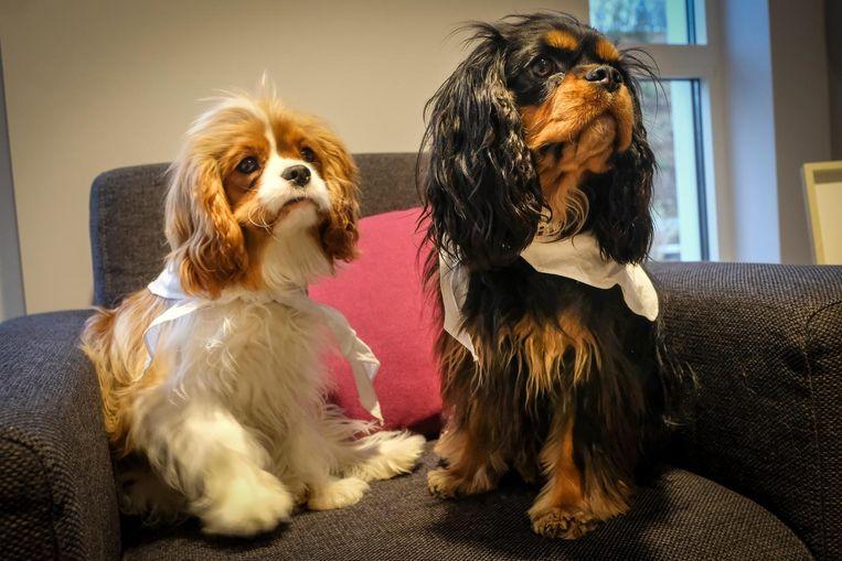 Hondjes Quito en Lily zijn de eersten die mogen logeren.