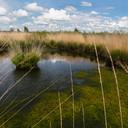 Zo ziet de huidige Peel er op sommige plaatsen uit. Het veenmos breidt zich weer uit. Foto uit 'Heel de Peel'.
