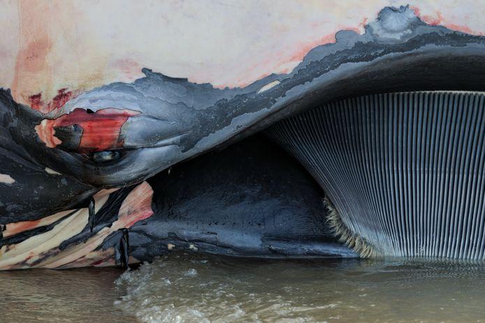 Wouter van der Voort won met deze foto van een aangespoelde vinvis op het strand van Ter Heijde de jongerenprijs van natuurfotografieprijs De Groene Camera.