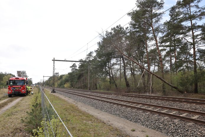 Een omgevallen boom zorgt voor veel vertraging tussen 't Harde en Zwolle.
