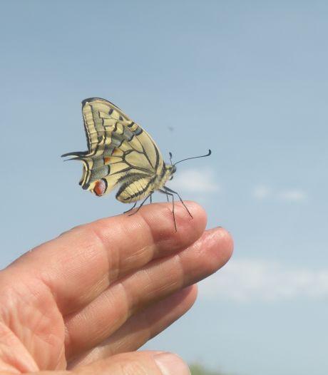 Tussen alle nieuwe bewoners van Guldenwater wonen straks ook 'vliegende Delftenaren'