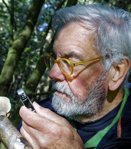 Veel minder paddenstoelen in Sparrenrijk en Zegenwerp: 'Ze hebben vocht nodig om te groeien'