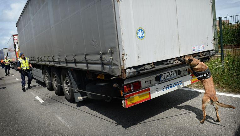 Een `migratiehond' van de marechaussee ruikt aan een Poolse vrachtwagen. Beeld Marcel van den Bergh / de Volkskrant
