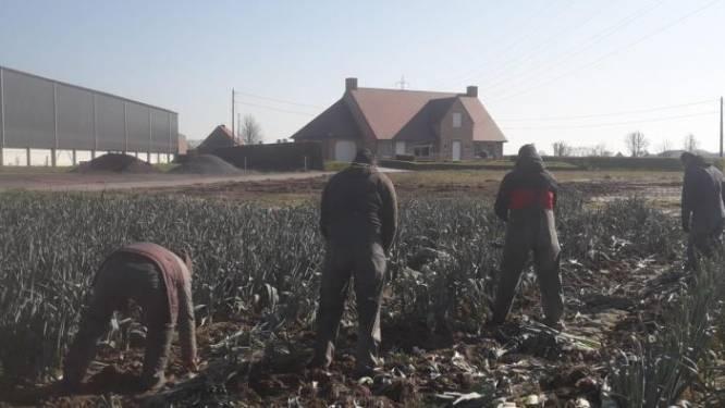 Asielzoekers helpen landbouwers, die werkkrachten te kort komen