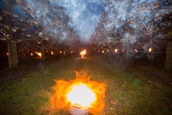 Vannacht hebben enkele Haspengouwse fruitboeren vuurpotten uitgezet om de bloesems te beschermen voor de nachtvorst