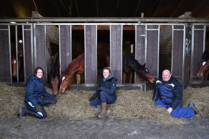 STRIJBEEK  Jan Stads / Pix4Profs Voor de rubriek Van West-Brabantse bodem, Stal de Roover, paardenfokkers in hart en nieren.