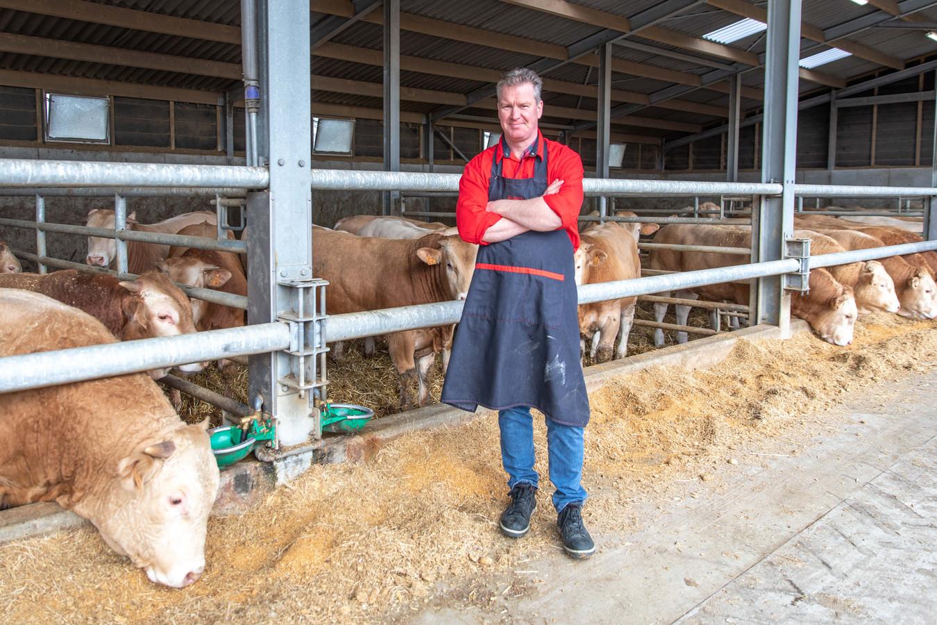Slager Theo Slager uit Sint Annaland bij een van zijn leveranciers: stieren; Blonde d'Aquitaine op stro.