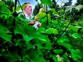 Wilco begon ooit een wijngaard met tien wijnstokken en levert nu 10.000 flessen wijn per jaar af