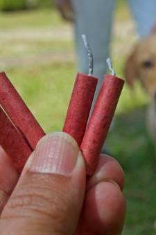 Vuurwerkstress bij je huisdier: wat kun je eraan doen?