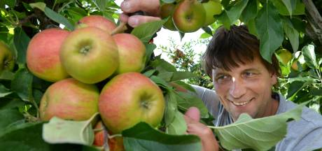 Goede fruitoogst Rivierenland ondanks de hitte