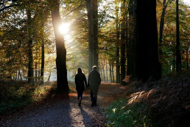 Geef de natuur de kans, zeggen natuurorganisaties. 'Er is nu anarchie in het bos' - Trouw