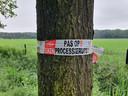 De gemeente Lille waarschuwt met linten voor de processierups.