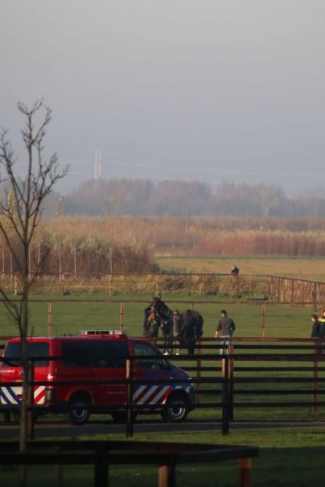 Vijf paarden uit sloot in Waddinxveen gered