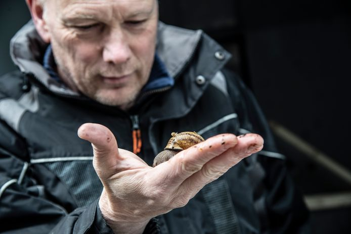 Ruud Klep kweekt slakken met groenafval van Nijmeegse horeca. Op zijn hand een volwassen slak, met op de rug een piepklein baby-slakje.