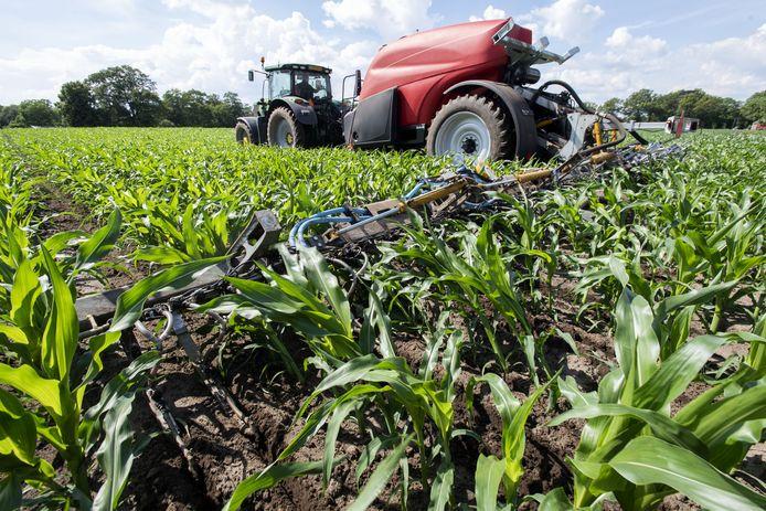 Duitse belangstelling voor nieuwe bemestingsmanier van maïsplanten, ontwikkeld in Berkelland.