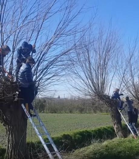 Bomen vliegen de grond in op Boomfeestdag