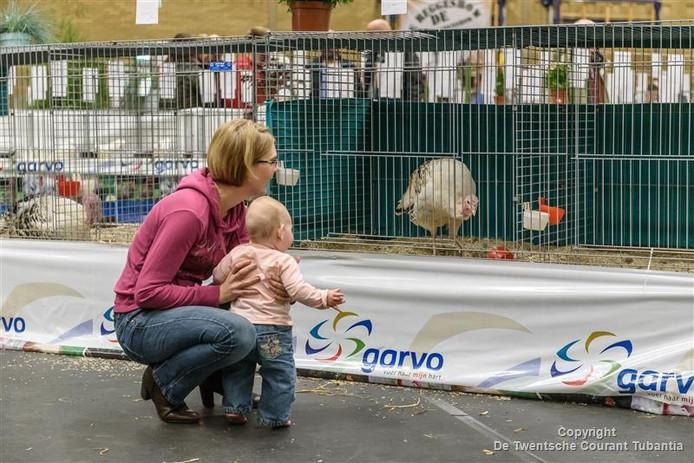 Indrukwekkende dieren op de Reggeshow in Rijssen.