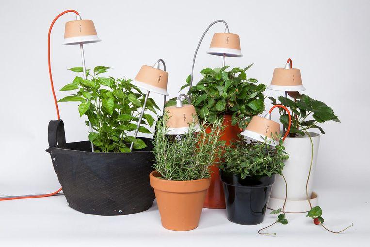 Dag licht: Wie binnenshuis kruiden wil laten groeien, heeft daar een daglichtlamp voor nodig. De lampen van Bulbo zijn er vanaf € 119. bulbolight.com Beeld null